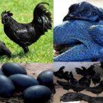 काला रंग क्या वाकई आपके लिए शुभ मंगलकारी (Auspicious) है?