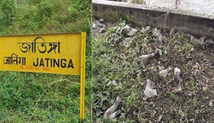 jatinga bird mystery in hindi