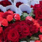 केवल सुंदरता और सुगंध ही नहीं औषधीय गुणों से भी भरा है फूलों का राजा गुलाब
